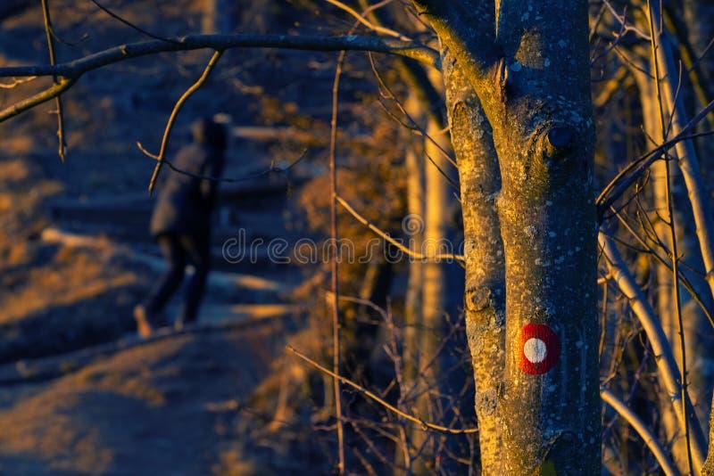 Маркировка следа на стволе дерева с hiker видимым в предпосылке стоковое изображение
