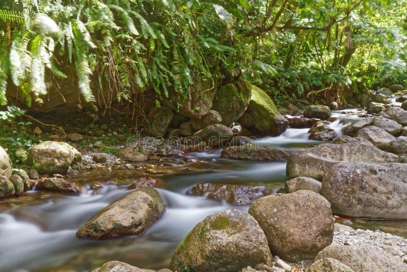 Мартиника, FWI - река Альмы в St Joseph стоковые изображения