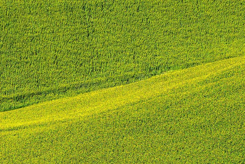 Марты (Италия) - поле солнцецветов стоковые фото
