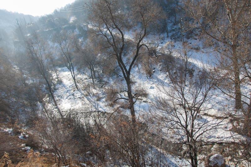 Масло завода, дым на небе, экологичность стоковая фотография rf