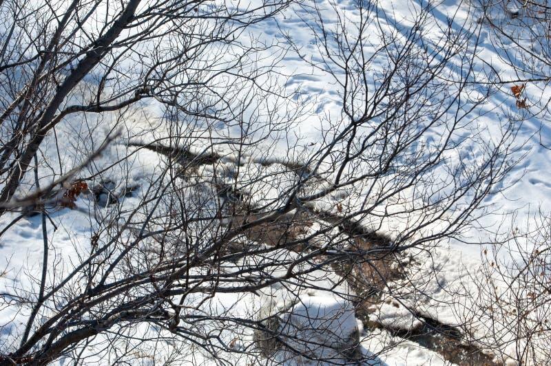 Масло завода, дым на небе, экологичность стоковые фотографии rf