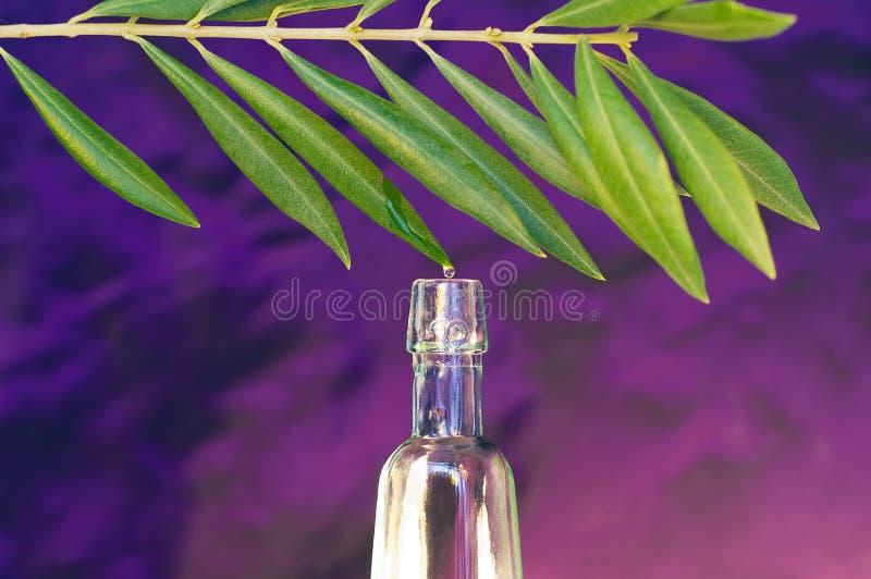 Масло оливкового дерева Стоковые Изображения