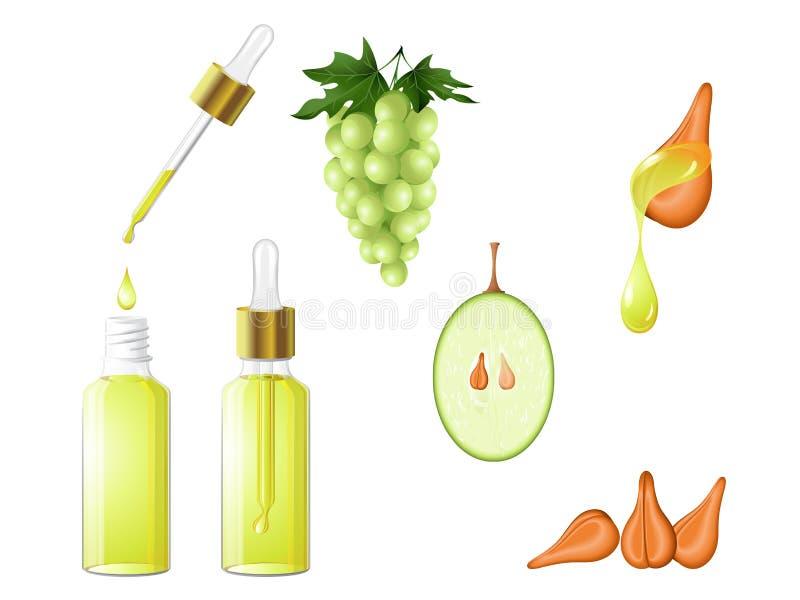 Масло семени виноградины естественное иллюстрация вектора