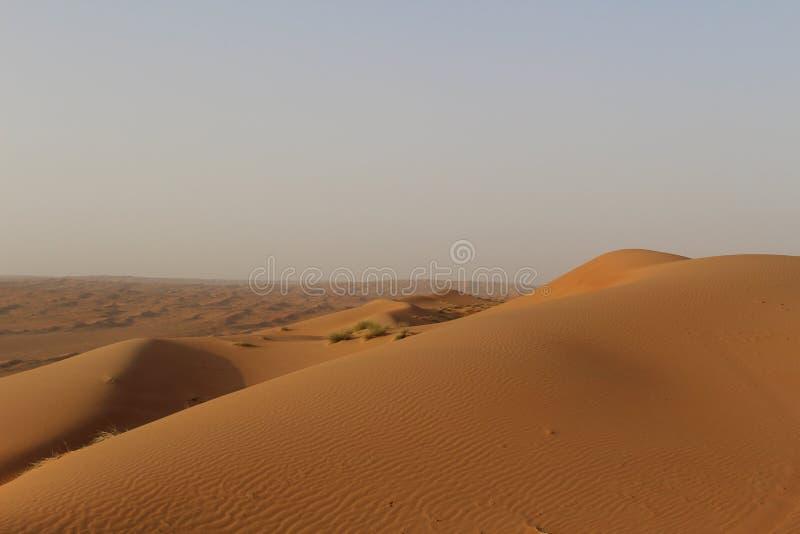 Массивнейшая дюна в песках Wahiba в Омане стоковые изображения rf