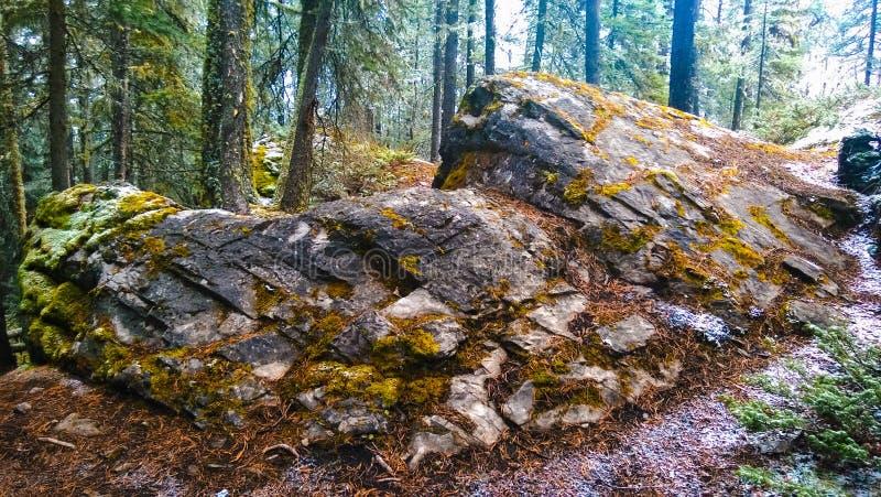Массивнейший утес в лесе горы стоковое фото rf