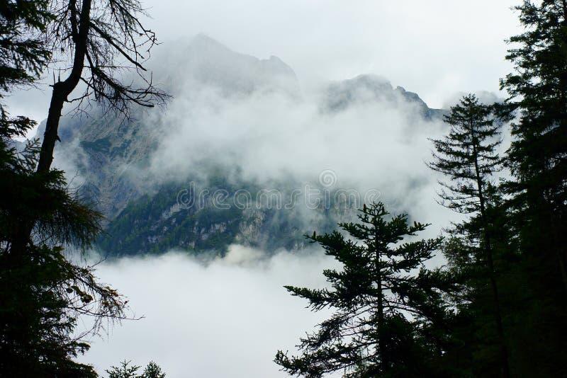 Массив в пейзаже тумана стоковая фотография