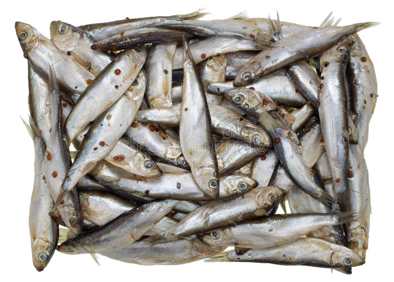 Массовое захоронение маленьких серебристых рыб стоковые фотографии rf