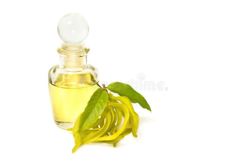 Масло массажа ароматности иланг-иланга стоковые фото