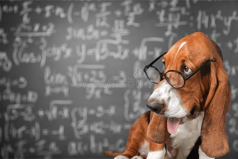 математика стоковые изображения rf