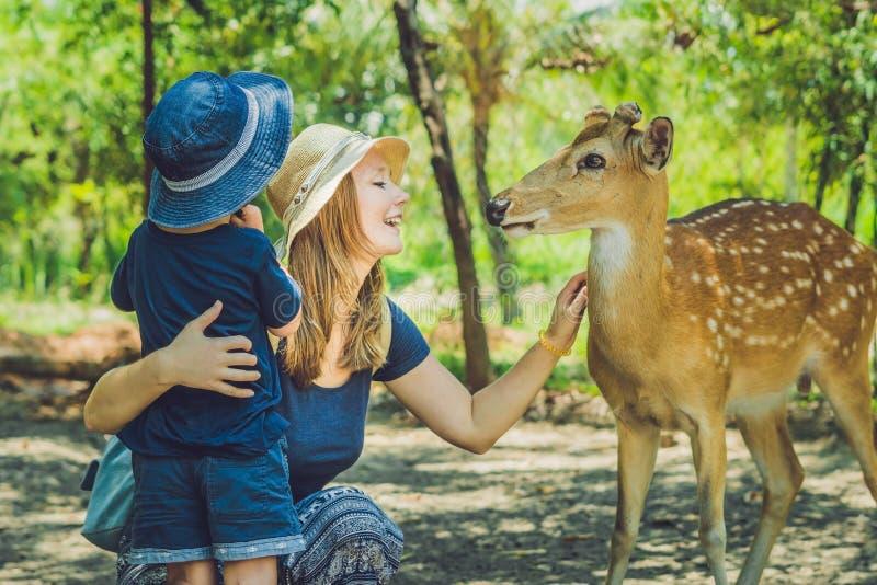 Мать и сын подавая красивые олени от рук в тропическом z стоковое фото rf