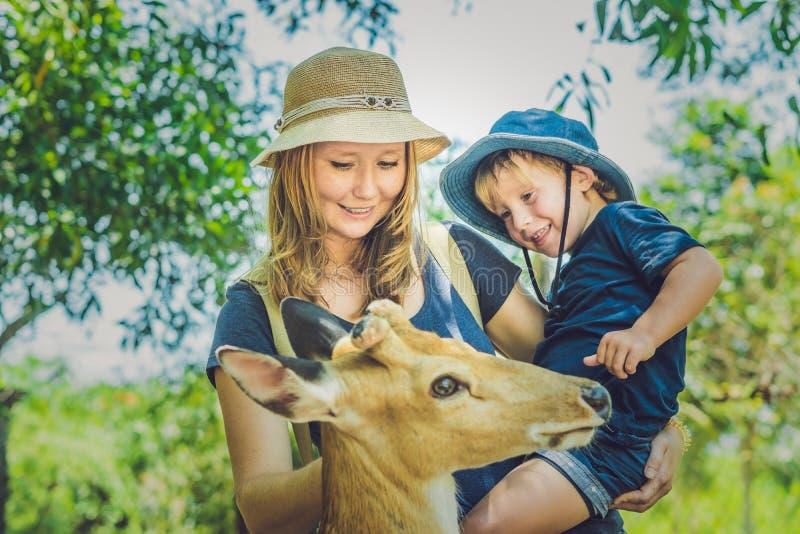 Мать и сын подавая красивые олени от рук в тропическом z стоковая фотография