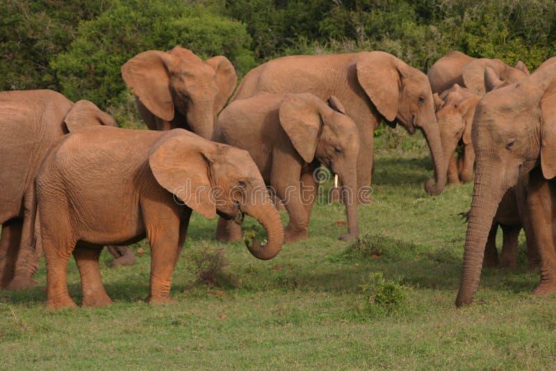 мать семьи слона кокоса икры младенца около стержня ладони стоковые фото