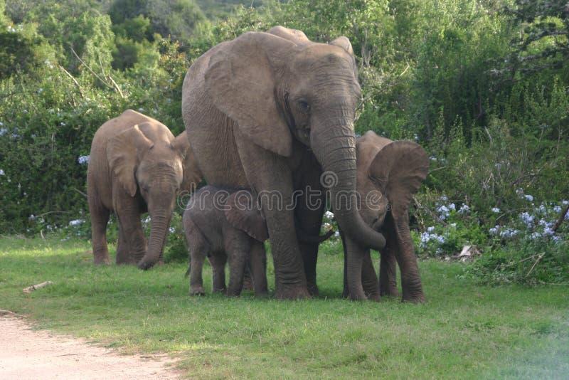 мать семьи слона кокоса икры младенца около стержня ладони стоковые изображения