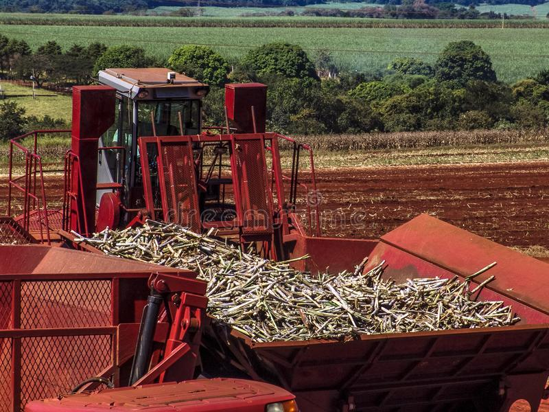 Машина засаживая сахарный тростник стоковая фотография