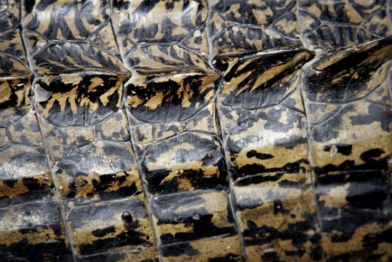 маштабы аллигатора стоковое фото rf