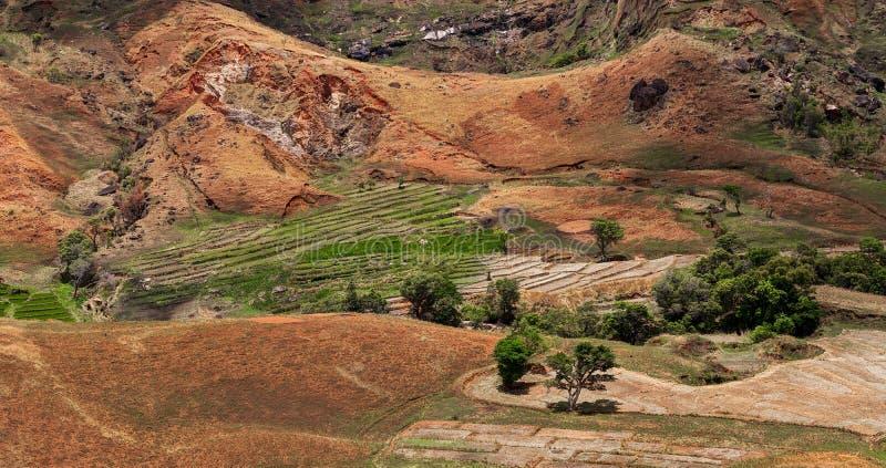 Малагасийская ферма с террасными полями стоковые фото