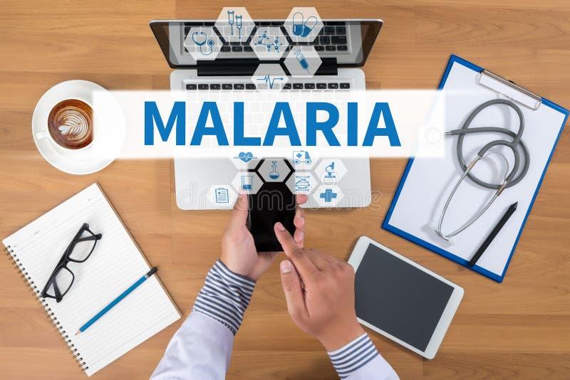 малария стоковые изображения