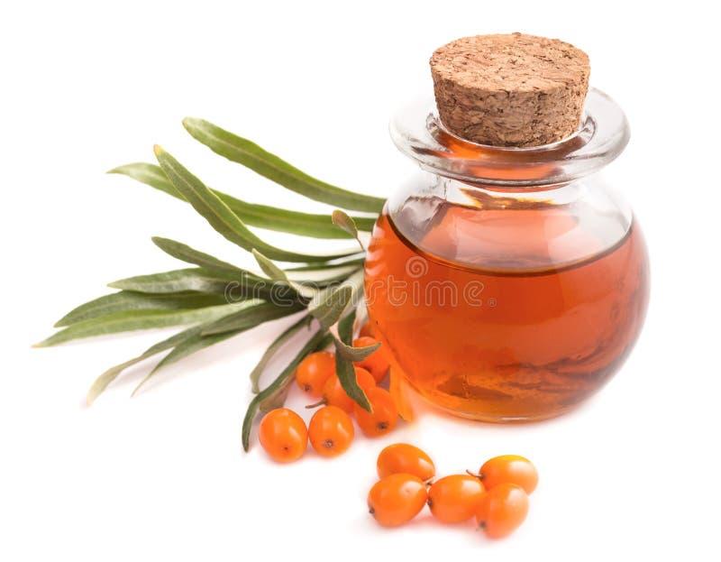 Малая бутылка масла и ягод крушины моря на белизне стоковое фото