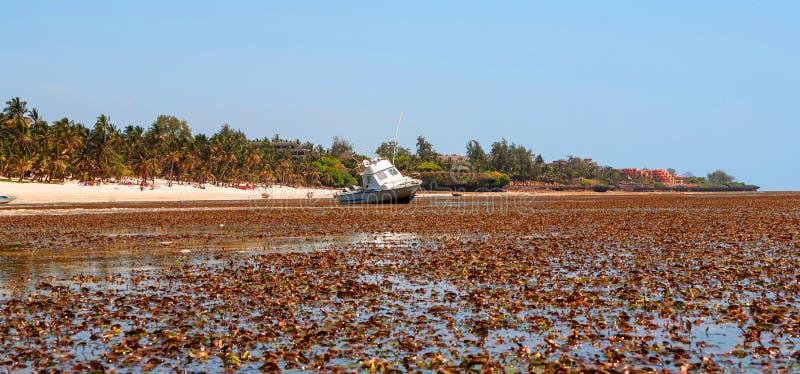Малая вода на пляже океана aleut стоковое фото