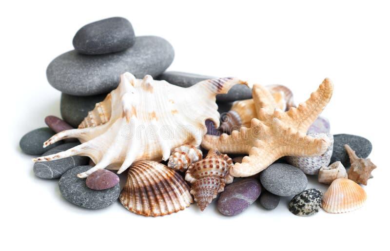 Малая куча камней моря и бежевого cockleshell стоковая фотография