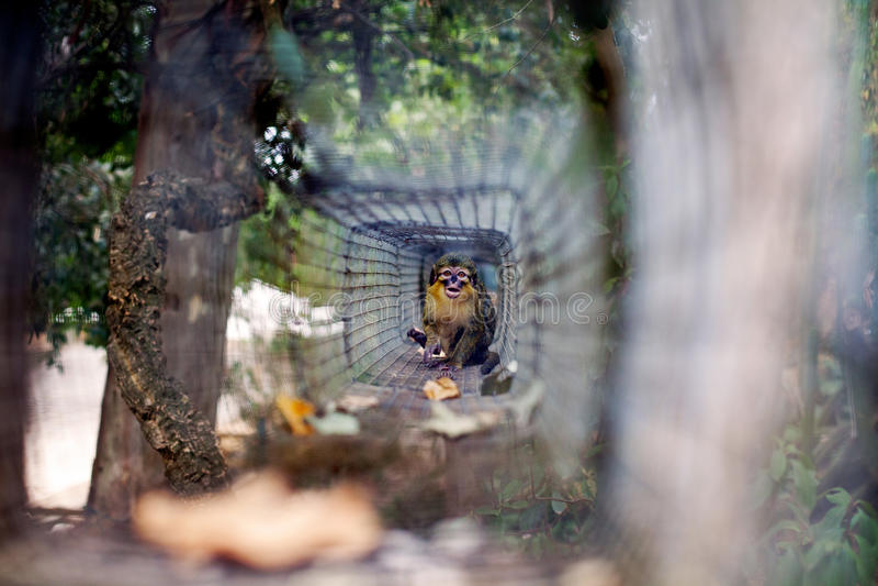 Малая обезьяна на зоопарке стоковая фотография rf