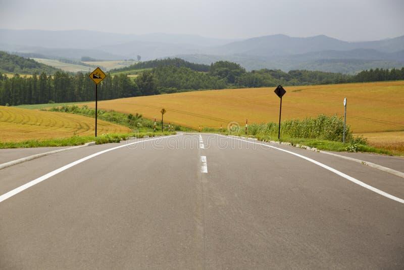Малая дорога с дорожным знаком и пшеничное поле в городке Biei, Хоккаидо стоковое фото rf
