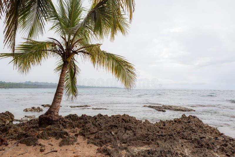 Малая пальма в скалистом пляже стоковые фотографии rf