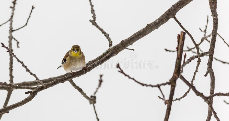 Малая птица на ветви стоковое изображение rf