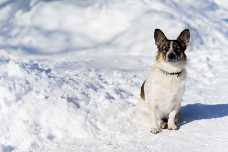 Малая собака сидя на снежной дороге стоковая фотография rf