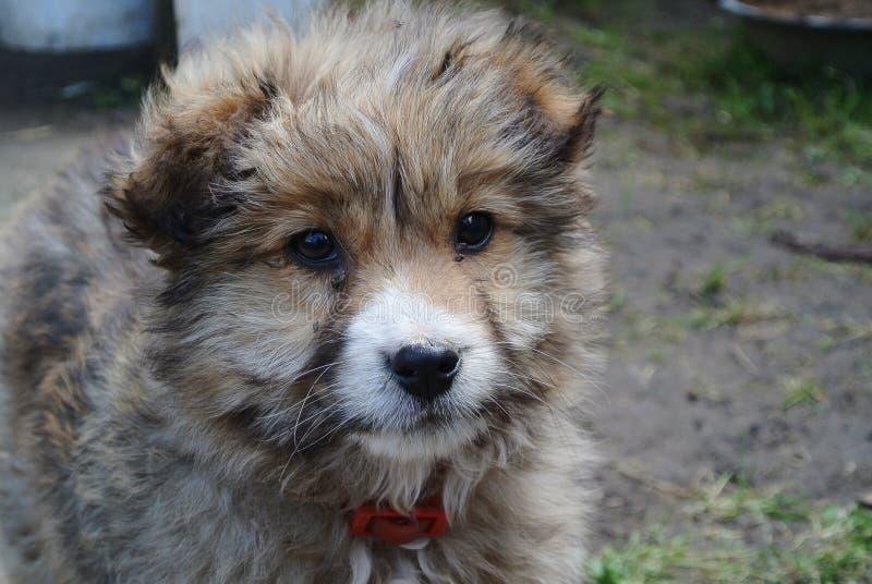 Малая собака щенка с воротником стоковое фото rf