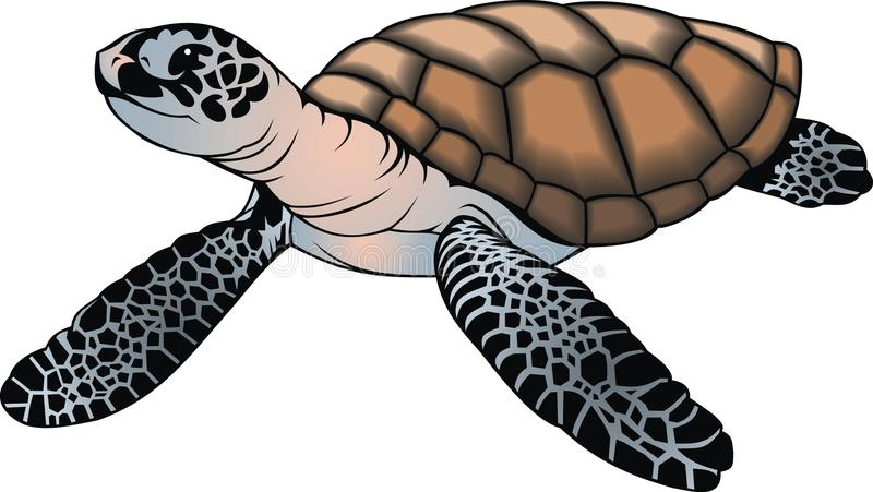 Малая черепаха иллюстрация штока