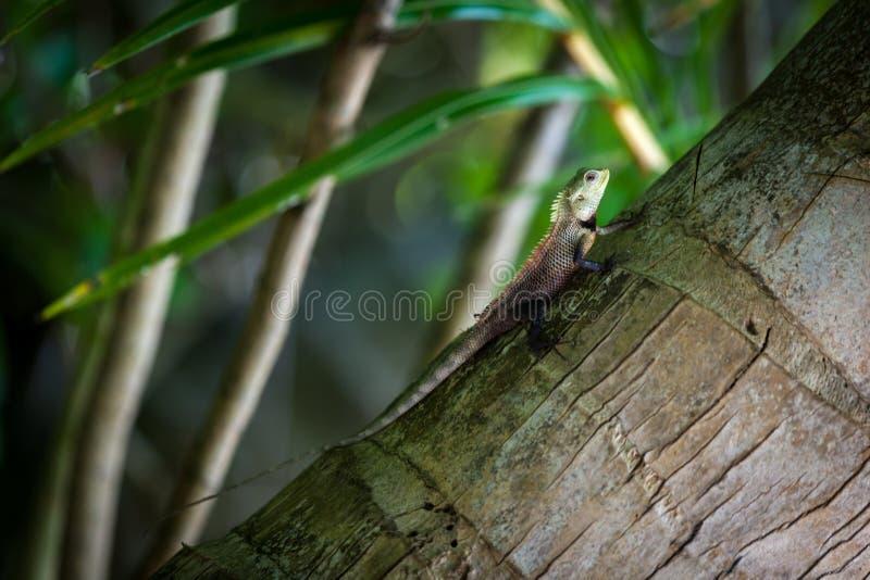 Малая ящерица на пальме стоковые изображения