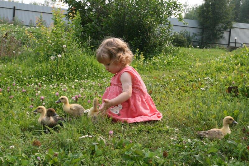 Маленькая девочка играя с утятами стоковые фото