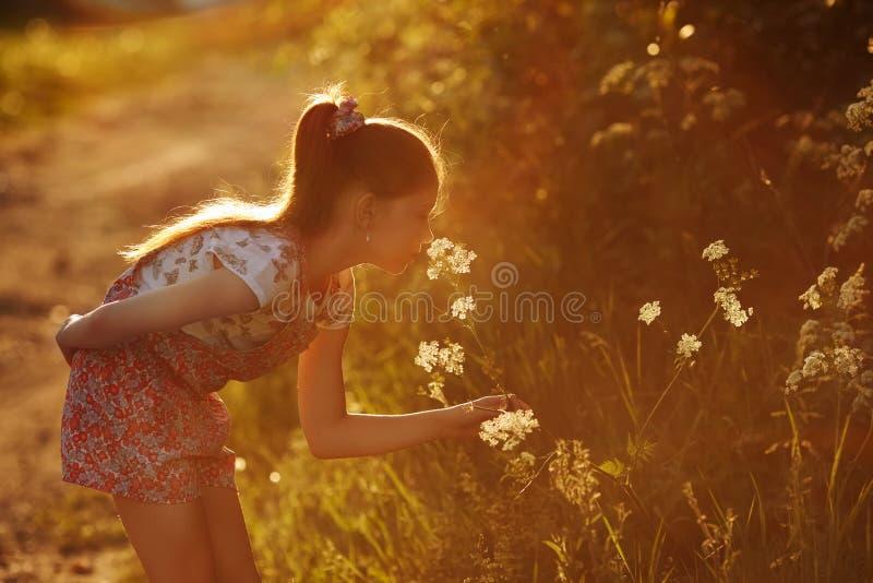 Маленькая девочка пахнуть полевым цветком стоковое фото rf
