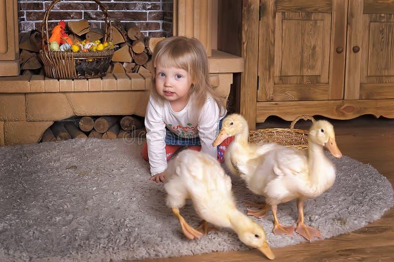 Маленькая девочка с утятами стоковая фотография rf