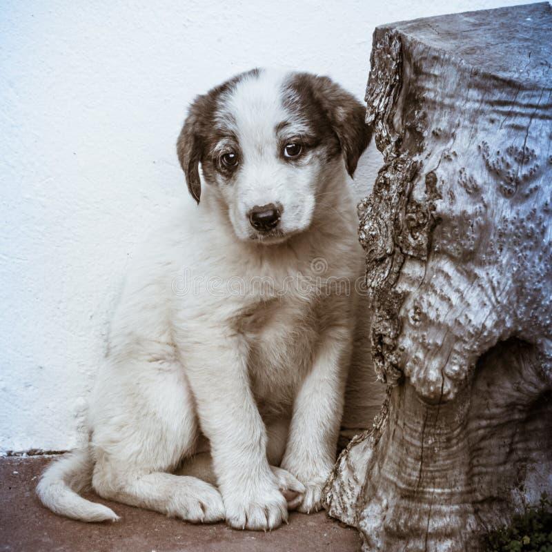 Маленькая застенчивая собака щенка стоковое изображение