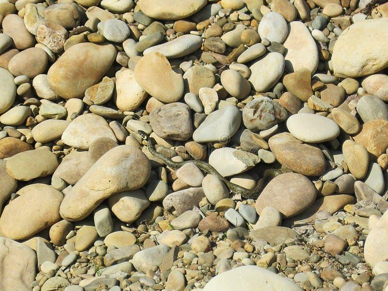 Маленькая зеленая змейка вползая на утесах и греться стоковое фото rf
