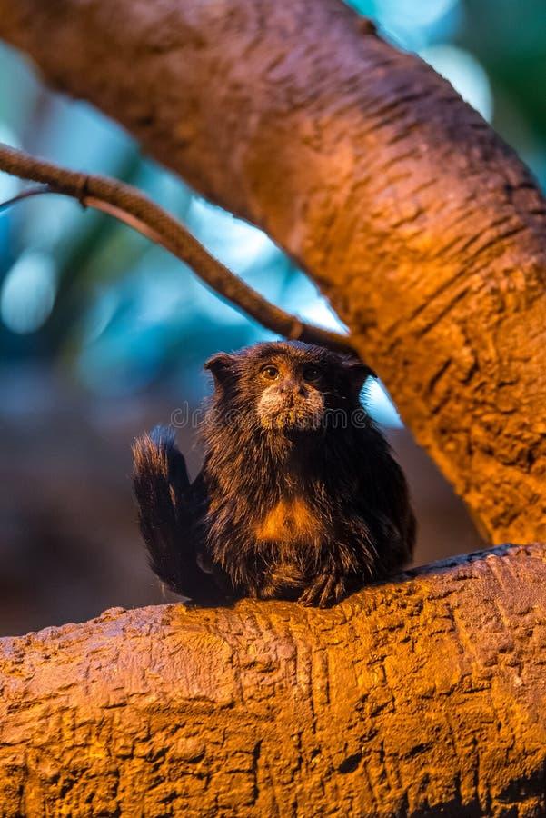 Маленькая обезьяна в дереве стоковое фото rf