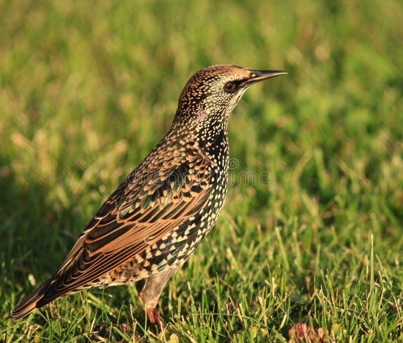 Маленькая птица в траве стоковое изображение