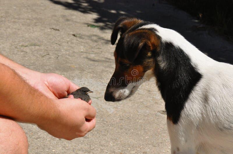 Маленькая птица на ладони и собаке стоковое изображение rf