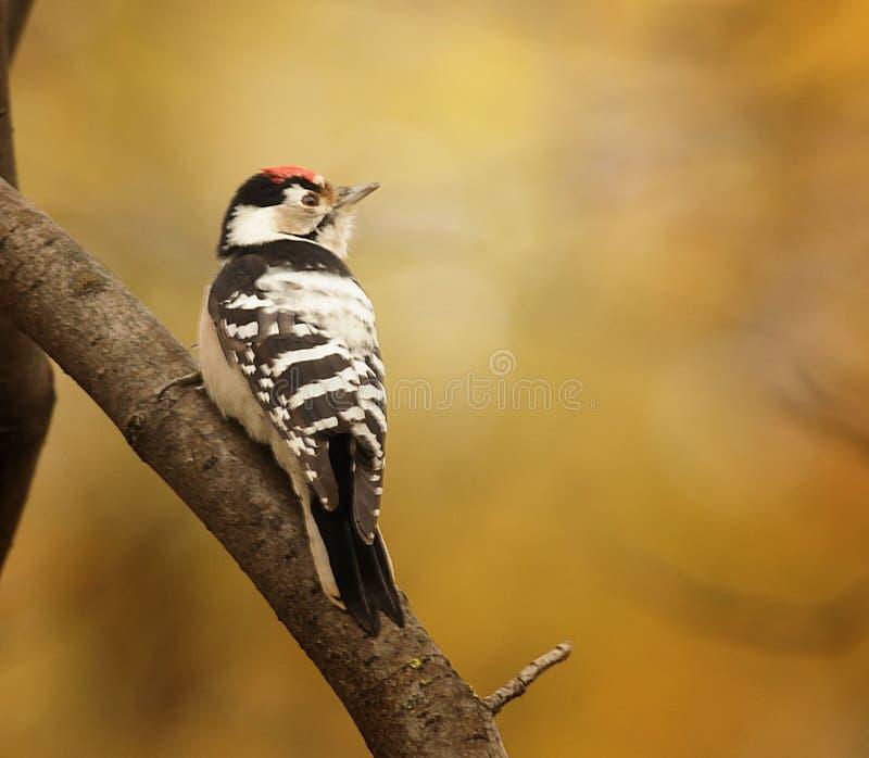 Маленькая птица на ветви дерева стоковое фото rf