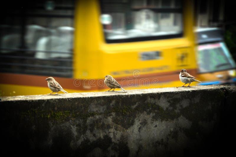 Маленькая птица стоковая фотография
