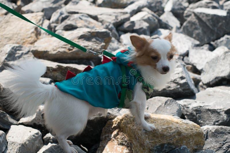 Маленькая собака ища что-то стоковое изображение