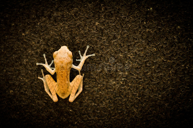 Маленькая лягушка на стекле стоковые изображения