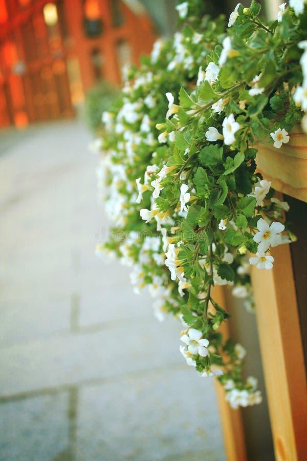Маленькие белые цветки стоковая фотография rf