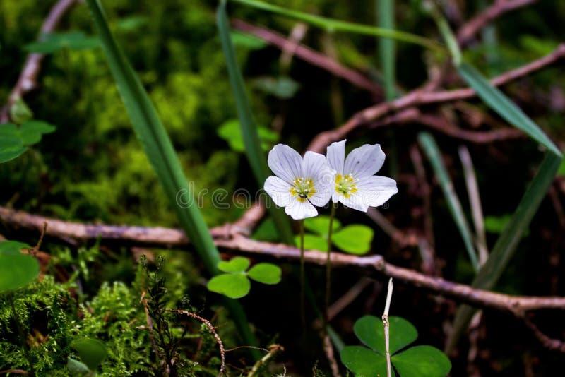 Маленькие белые цветки стоковое изображение rf