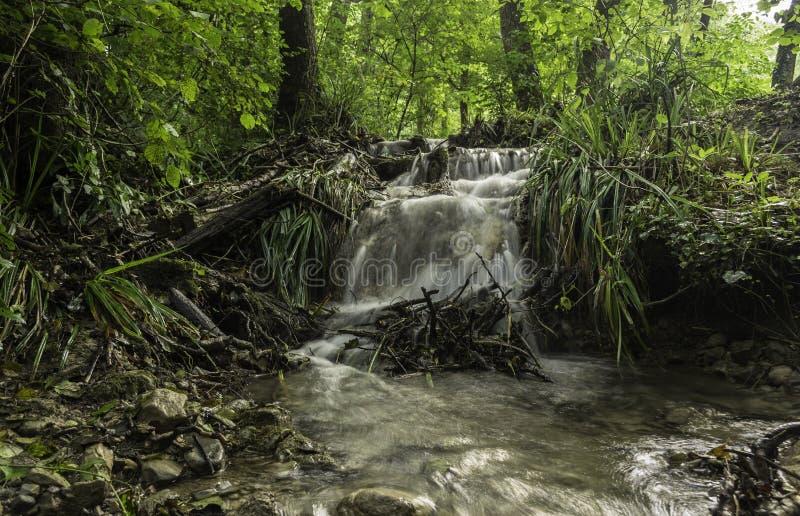 Маленькие каскады, река Toplica, Daruvar, Хорватия стоковые фото