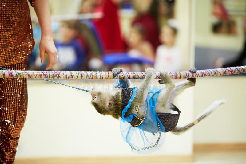 Маленькие подъемы обезьяны на веревочке стоковое изображение