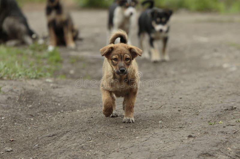 Маленькие прогулки щенка стоковое фото rf