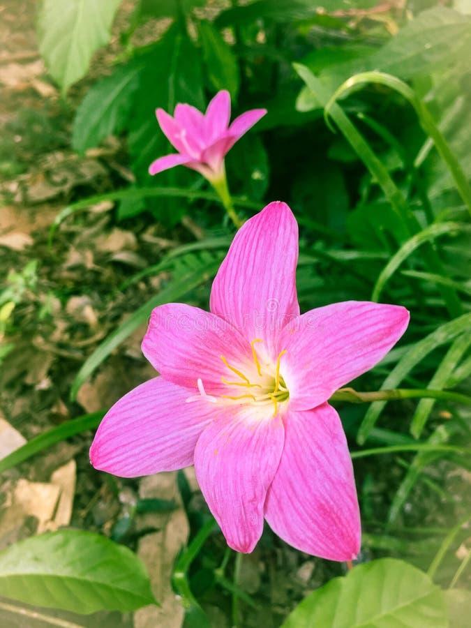 Маленькие цветки стоковое фото rf
